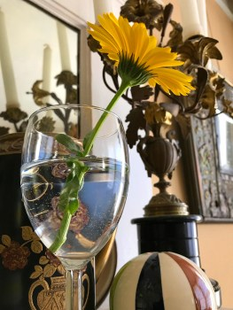 daisy in a wine glass