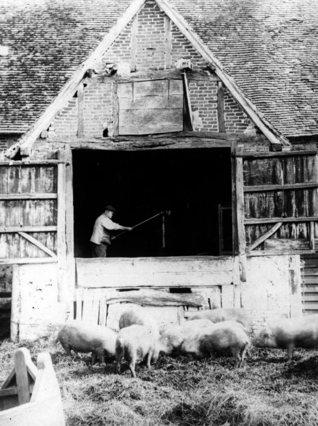 The threshing barn with a person using a flail to thresh the wheat.