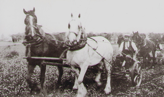 Ploughing teams in the village