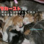ママカーストをあえて可愛いイメージで可愛い子猫とママ猫の寝顔