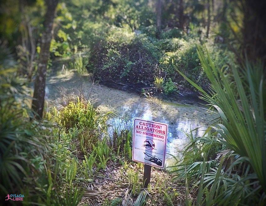 Juniper Springs - Caution alligators