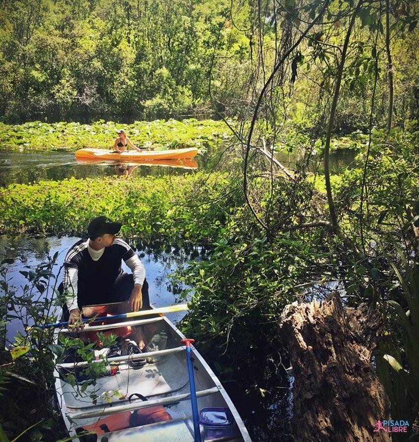 Canoa Bosque Ocala Florida