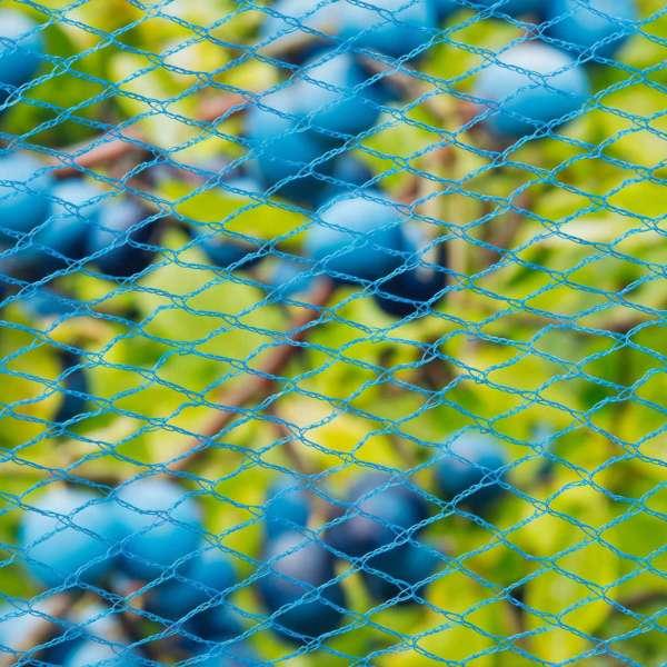 Nature Plasă anti-păsări Nano, albastru, 10 x 4 m