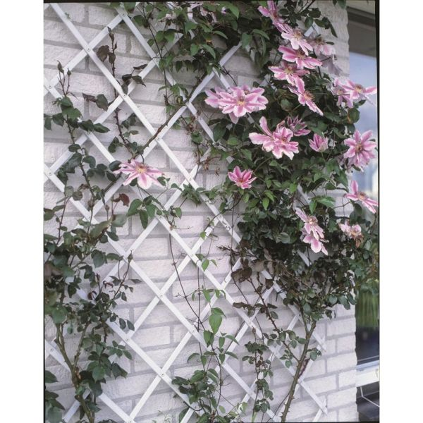 Nature Gard de grădină tip Trellis, 50 x 150 cm PVC, alb, 6040701