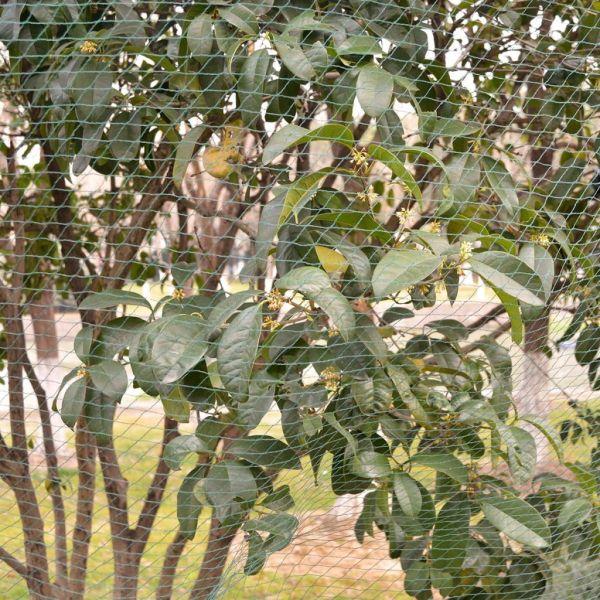 Plase anti-păsări 2 buc, 6 x 8 m PE
