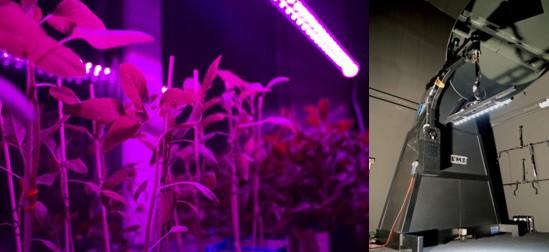 horticoles à LED