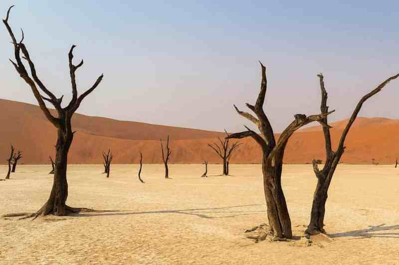dry desert with dead brown trees with no leaves with mountains in the background representing clomid drying up CM