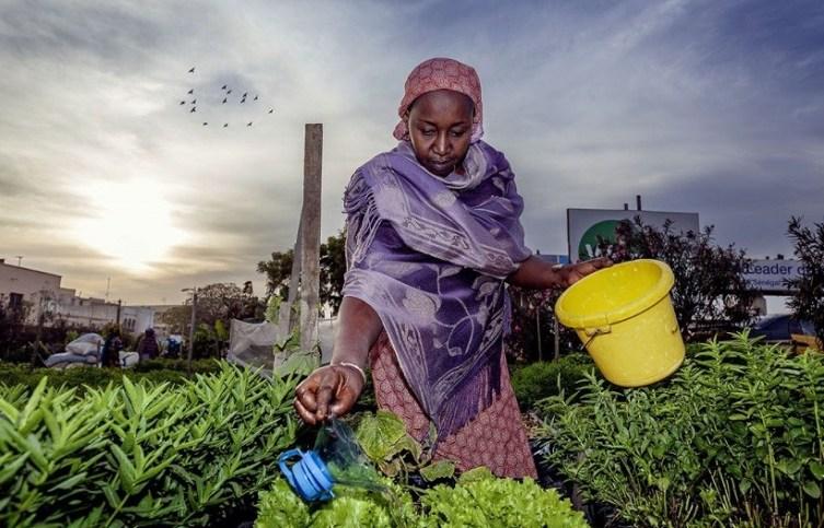 nigerian startups - thrive agric