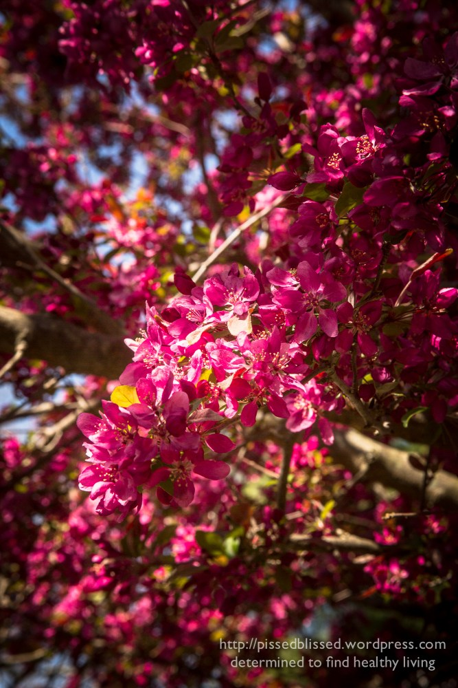 Spring Inspiration (1/3)