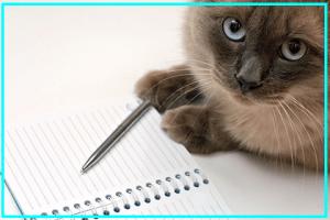 画像引用元:http://susaki.cocolog-nifty.com/blog/images/2014/07/16/140716_bl_susaki_study_cat.jpg