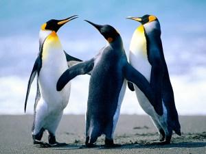 ペンギン フリー
