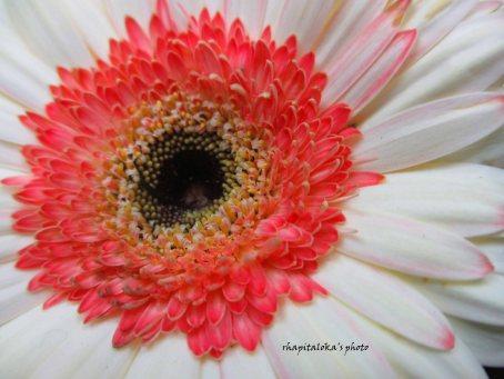 white - pinky flower