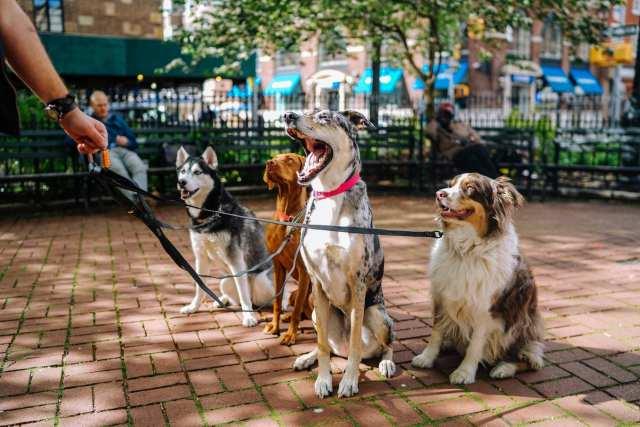 Uber of Dogwalking - Dogs