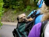Dog,traveller