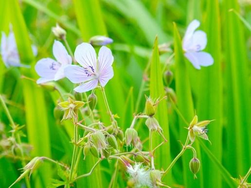 Flowers, Nature, Summer