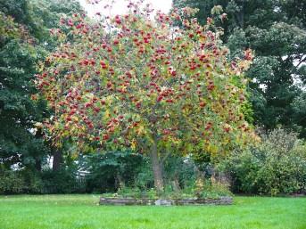 Autumn, Nature, season, Menston-Yorkshire