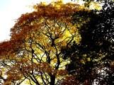 Autmn, nature, landscape, Menston