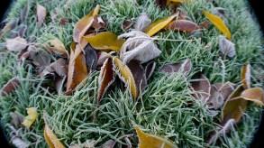November, frost, Autumn