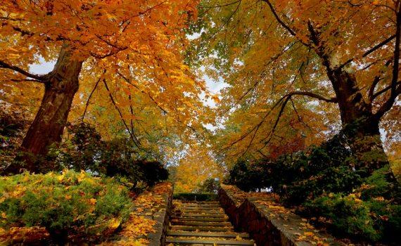 leafy stairway