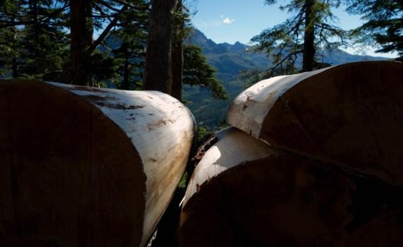 Logs on Mountain