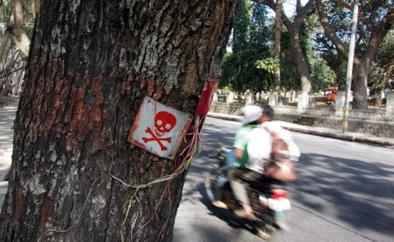 Warning on Tree Mysuru