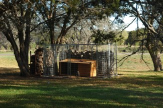 kennekl and dog-house