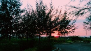 Trees in Cainta, Rizal, Philippines