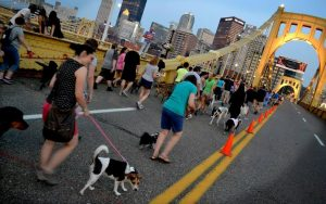 hang out with your pet in Pittsburgh