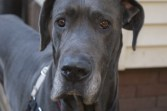 Clyde Pittsburgh dane rescue (6)