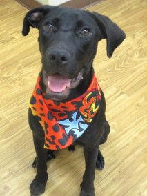 sherlock-puppy-rescue-2