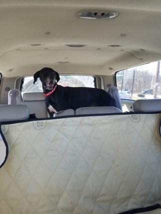 Oreo PA Dane rescue (1)