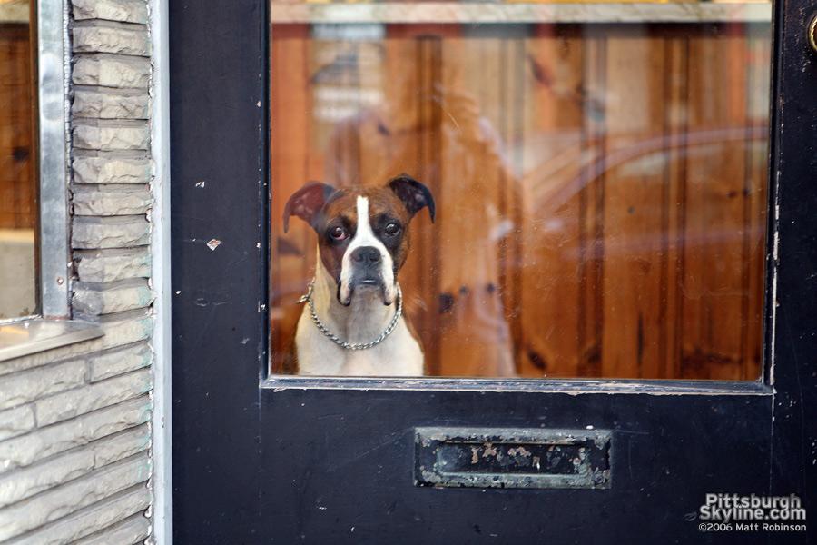 West End dog