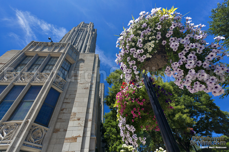 Hanging flower baskets and Cathedral of Learning