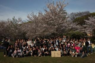 桜木花見ち_20100410