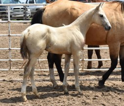Favorable Intentions X Diva Two Eyes Stud Colt