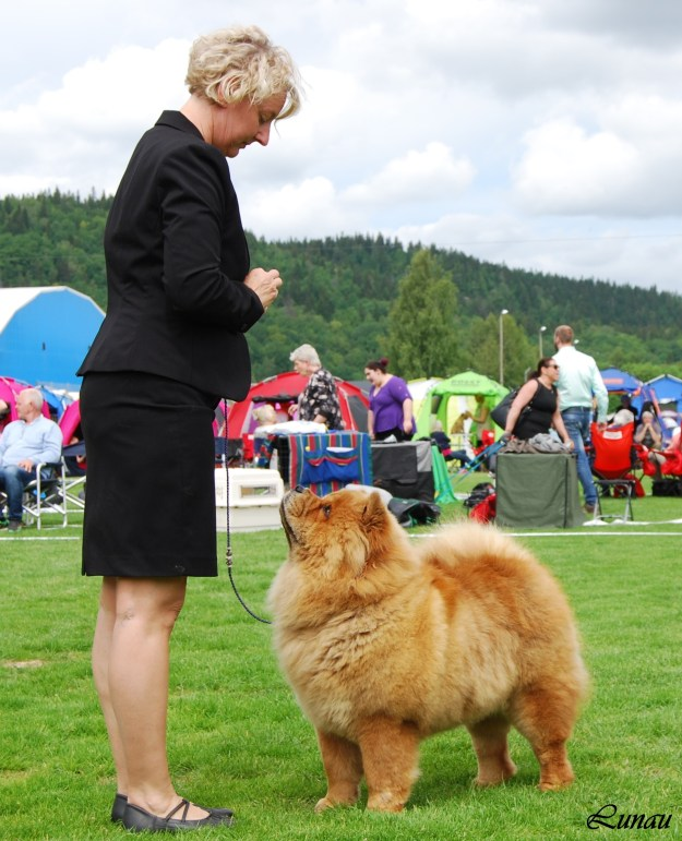 Piuk Chow Sweet Queen Of Paradise - BOB & BOS Boraas-Sweeden2015