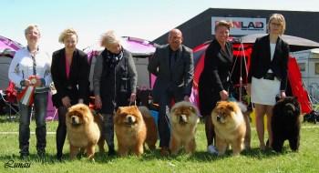 Piuk Chow Breeders Class _Best group ClubWinnerShow2015