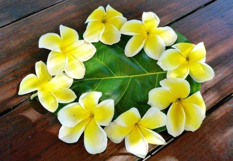 i fiori della polinesia