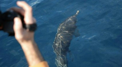 delfino in posa