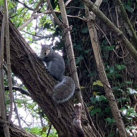 """Sophie Sr. Inf Ms. Godson """"Squirrel spotting in the forest at Bushy park"""""""
