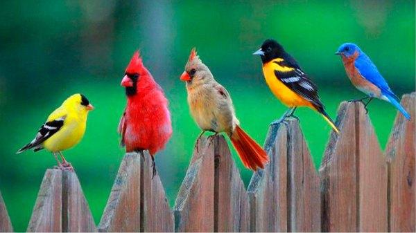 ТОП-16 самых красивых птиц в мире: фото, названия, описание