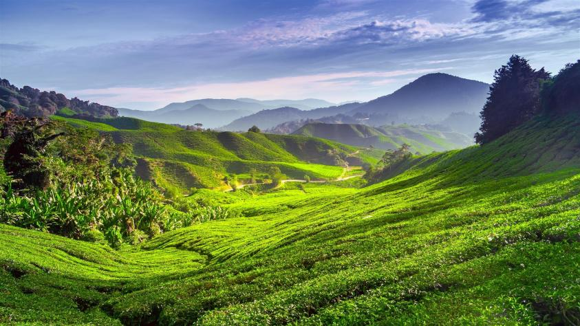 Cameron Highlands - Best Day Trips from Kuala Lumpur - Ummi Goes Where?