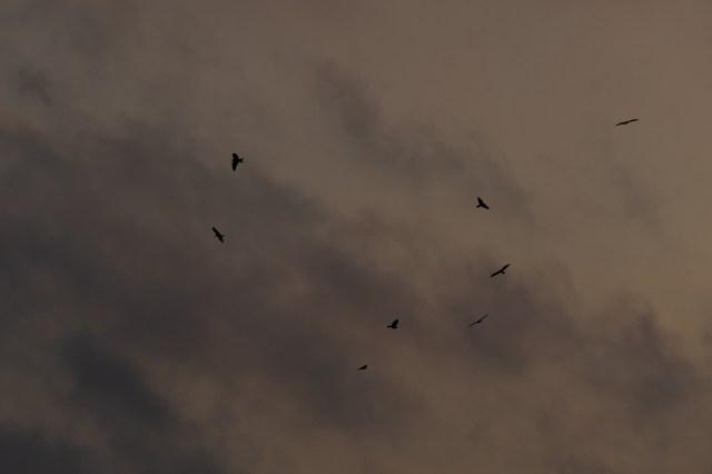 A flock of birds on a cloudy sky