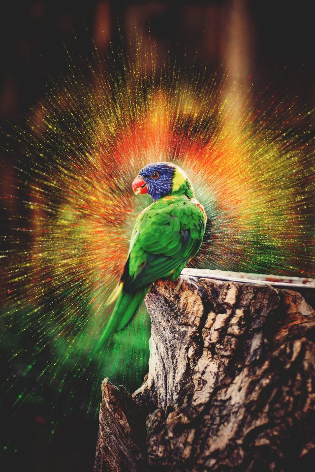 Parrot Bird Color Explosion