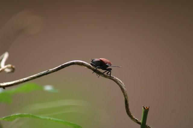 Bug in a Stem