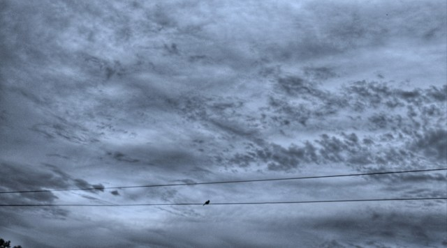 Lonely Bird on wire