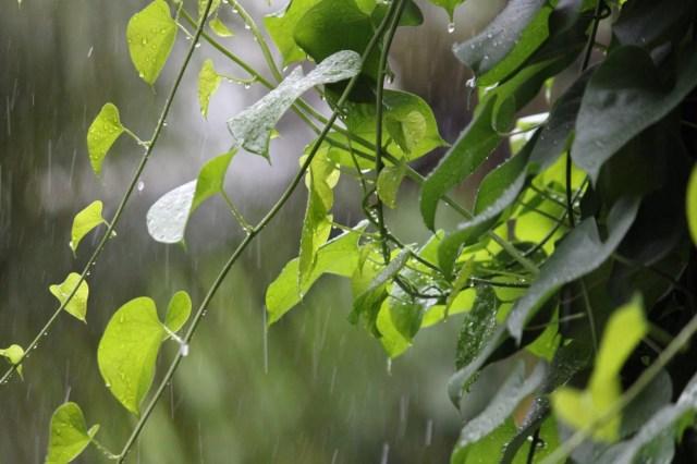 Plant on a Rainy Day