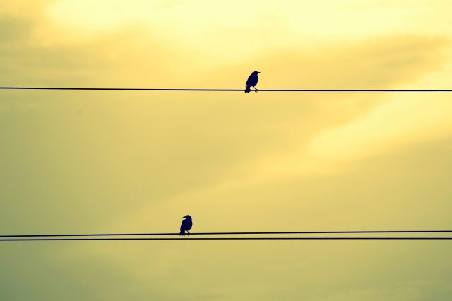 Two birds sitting on a wire