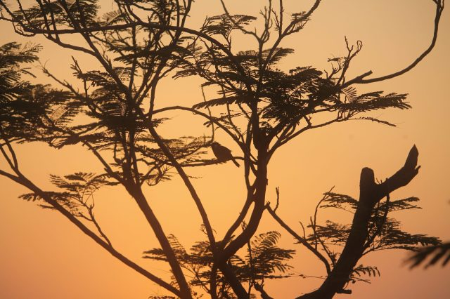 A tree during evening hours