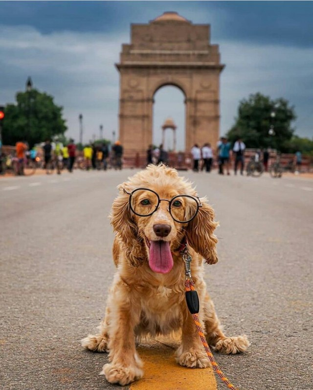 A pet dog on India gate road
